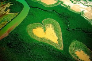 Mangrove swamps such as this one seen near Voh, New Caledonia cover nearly 25 percent of the world's coastal areas. That's just half their original range; exploitation of resources, agricultural and urban sprawl, and pollution have caused their demise. Vegetation gives way to bare spots, such as this heart-shaped one, where seawater rarely reaches